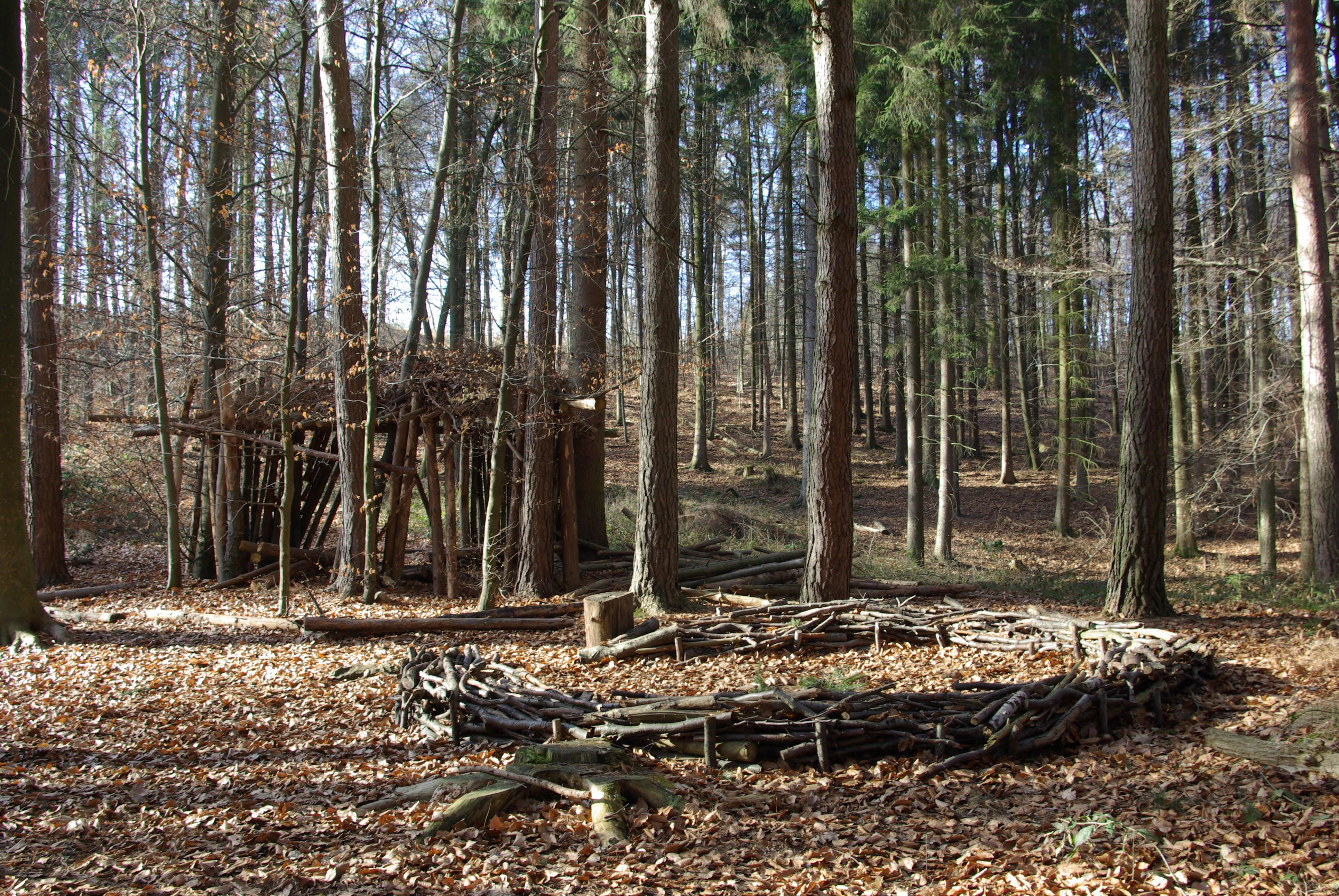 Bild Waldkindergarten